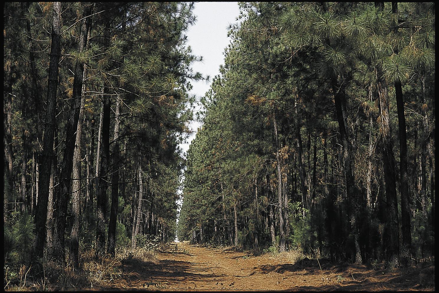 Bäume im Aufforstungsprojekt Prata