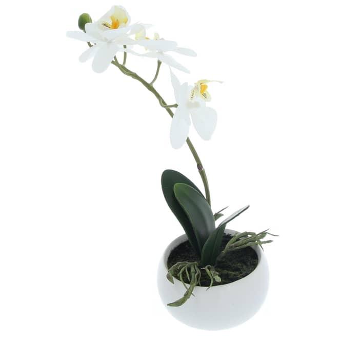 Orchidee - 25 cm