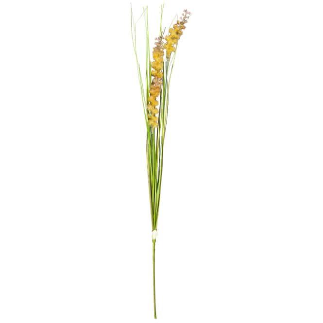 Sumpfgras - 85 cm
