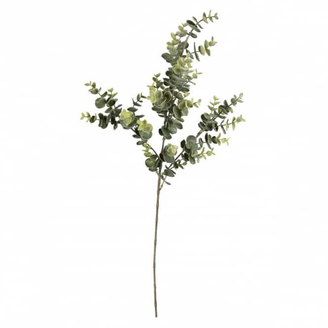 Eukalyptuszweig - ca. 70 cm