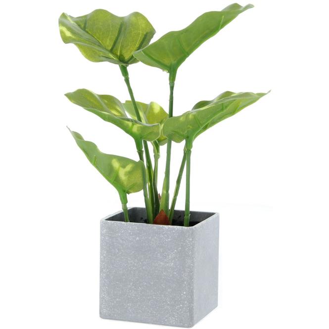 Grünpflanze - 22 cm - 1 Stück