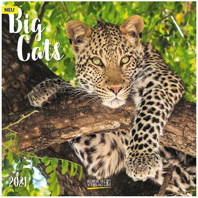 Kalender - Big Cats 2021