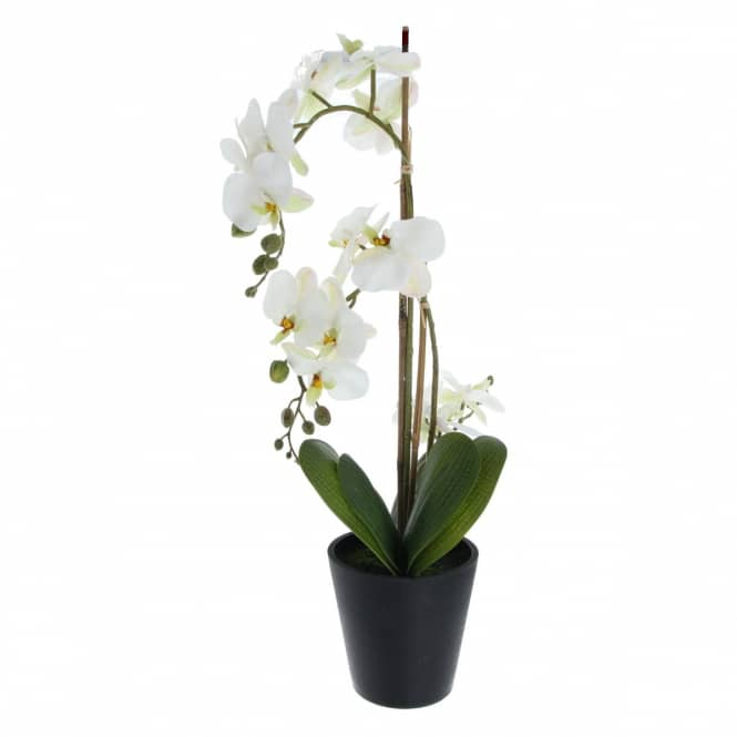 Orchidee - ca. 56 cm - creme