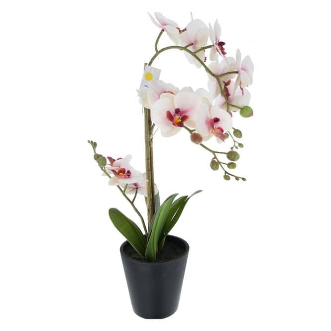 Orchidee - ca. 56 cm - weiß/rosa