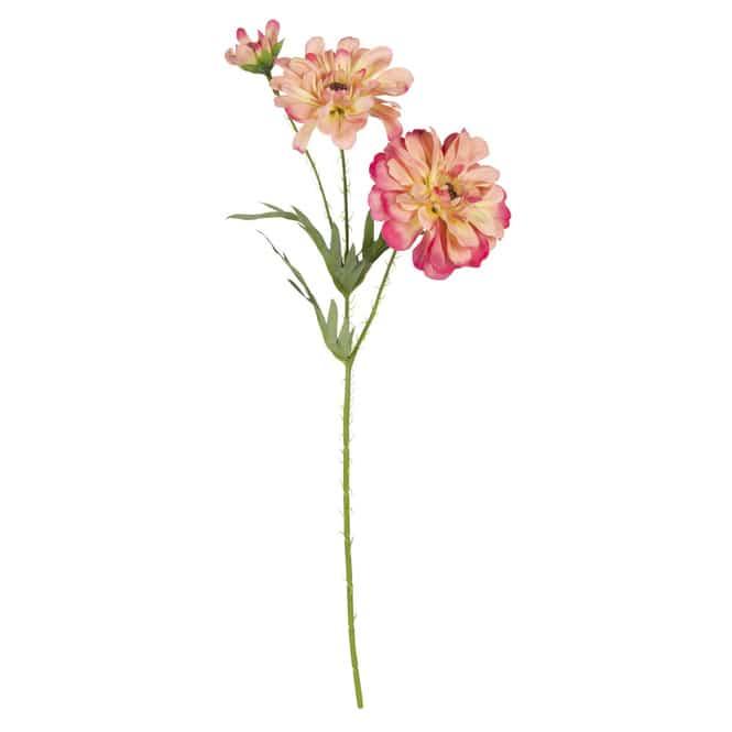 Zinnie - ca. 50 cm - pink