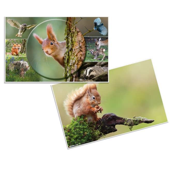 Wende-Schreibtischauflage - Waldtiere - ca. 55 x 35 cm