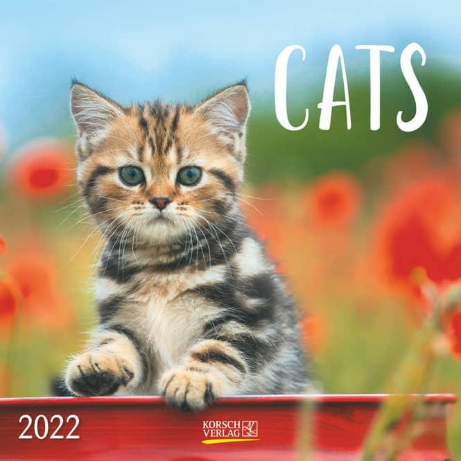 Kalender - Cats 2022