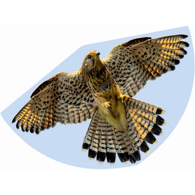 Drachen - Falke - ca. 92 cm