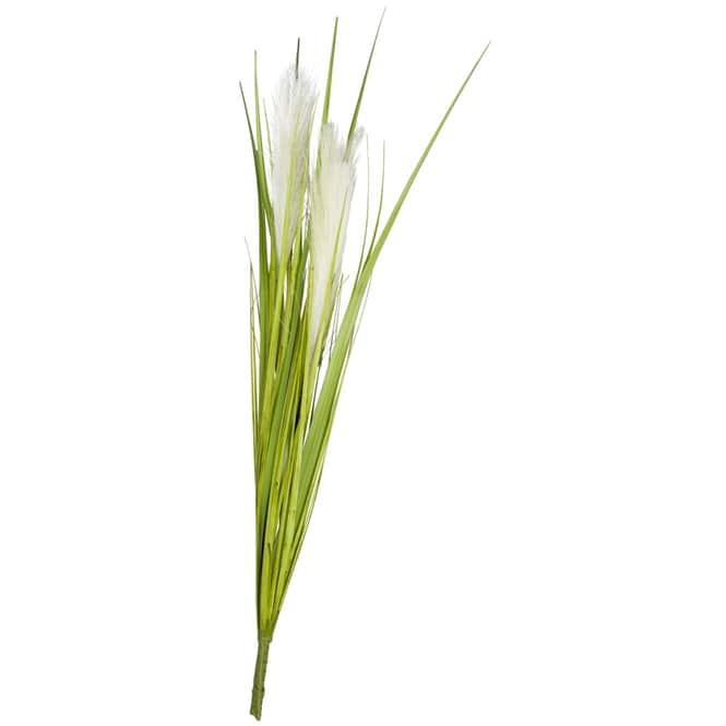 Palmgrasbüschel - 70 cm