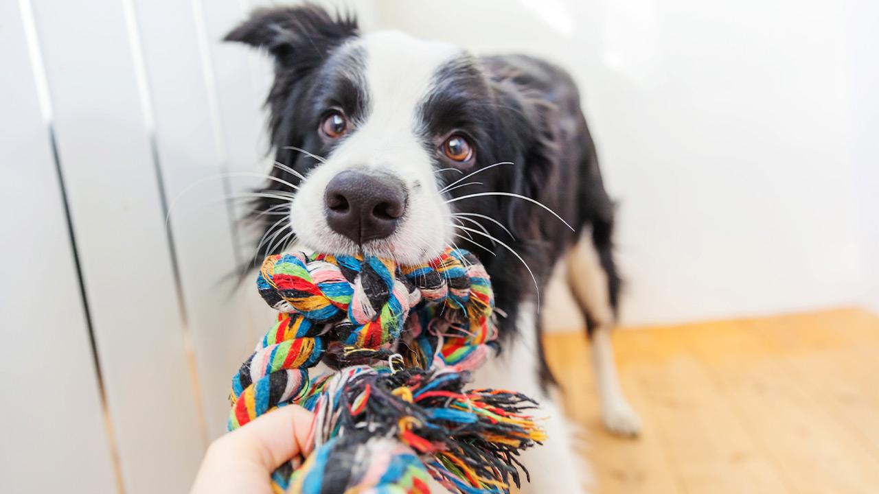 Mica Pets Tierspielzeug